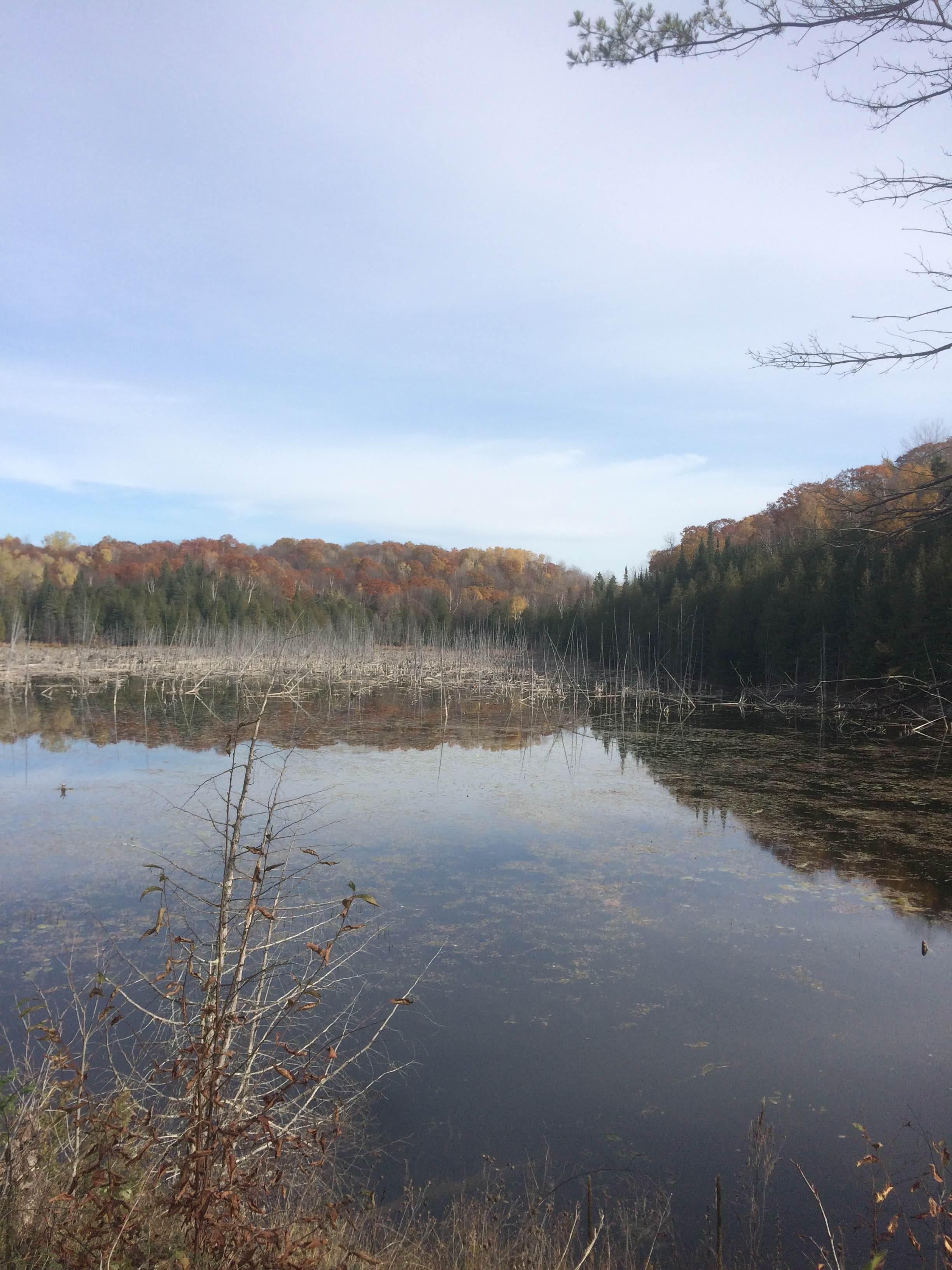 Vacant Land 16659 Hwy 509 Sharbot Lake Ontario Canada